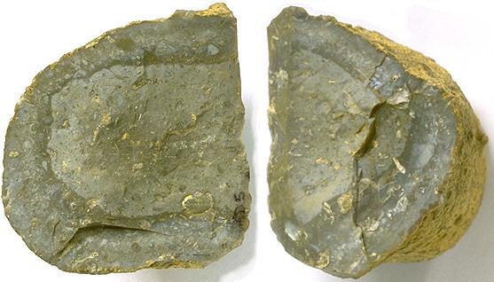 Jurahornstein Typ Adelschlag 01, Malm Zeta 3a