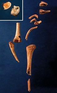 Sesselfelsgrotte, Knochenfunde Neandertaler, Foto